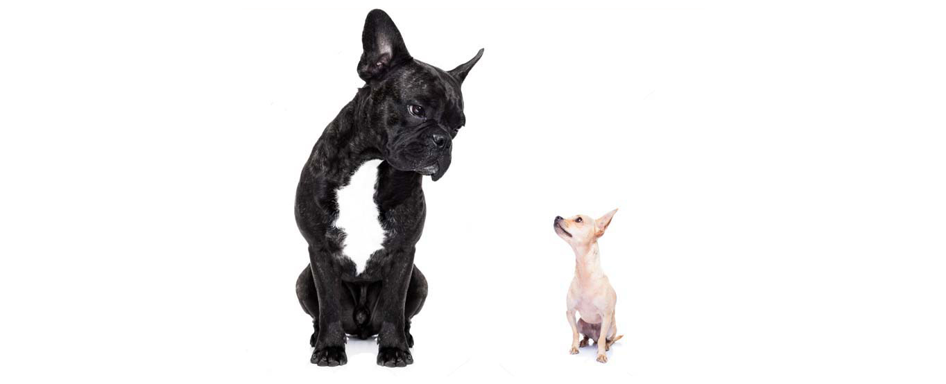 David vs. Goliath; why the biggest recruitment agencies aren't always the right choice